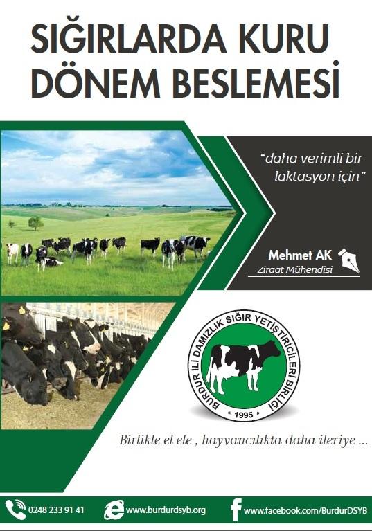 Sığırlarda Kuru Dönem Besleme