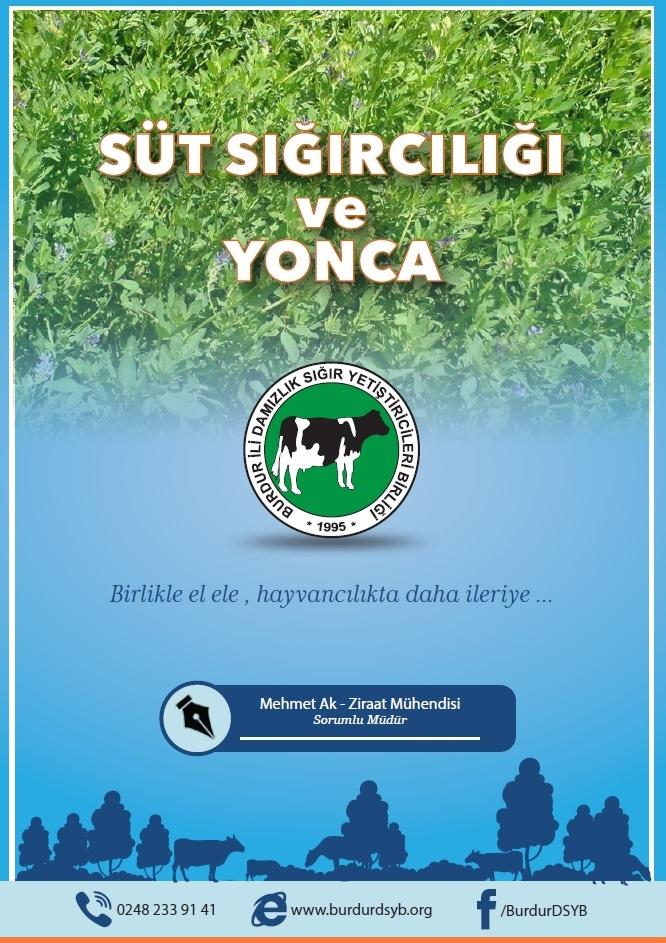 Süt Sığırcılığı ve Yonca